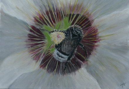 Buff-tailed bumblebee in stock 40x50 cm