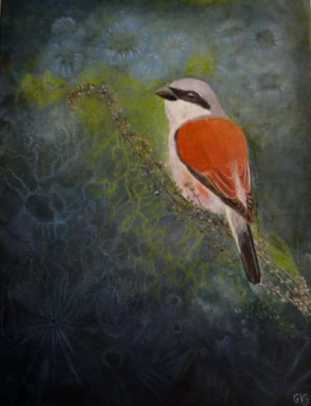 Red-backed shrike 60x80 cm